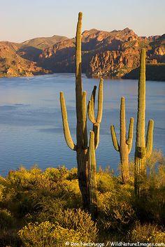 1c3178652cd61fef834a24ba8c09034f--lake-photos-arizona-usa
